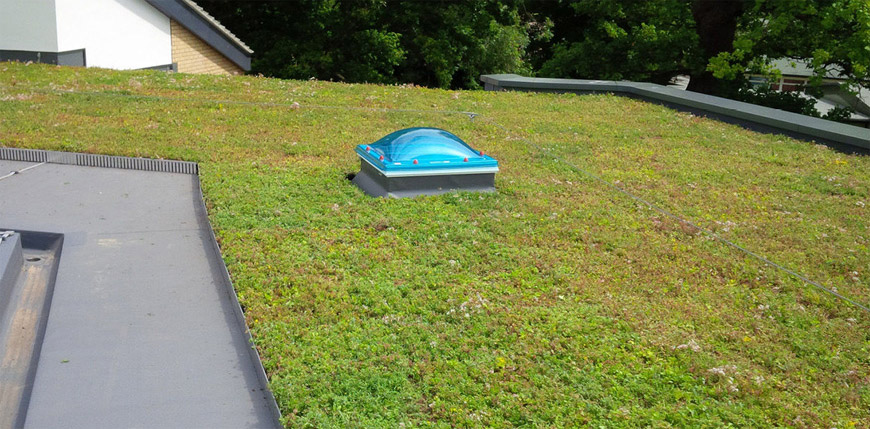 Different Types Of Green Roofs Merz Construction Products